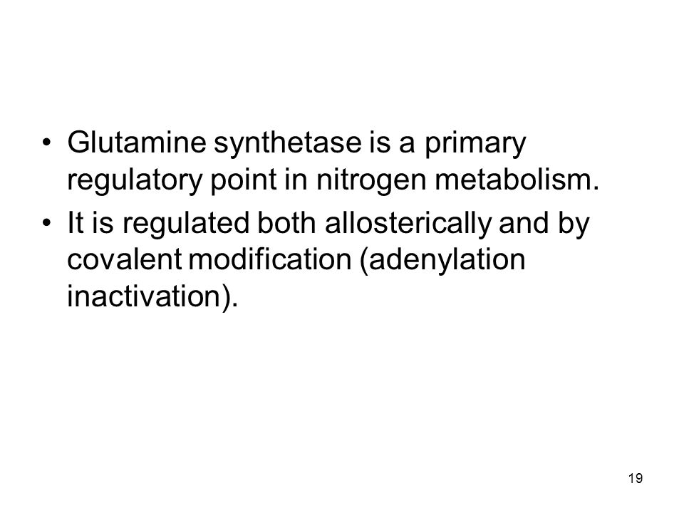 Glutamine synthetase is a primary regulatory point in nitrogen metabolism. It is regulated both allosterically and by covalent modification (adenylati
