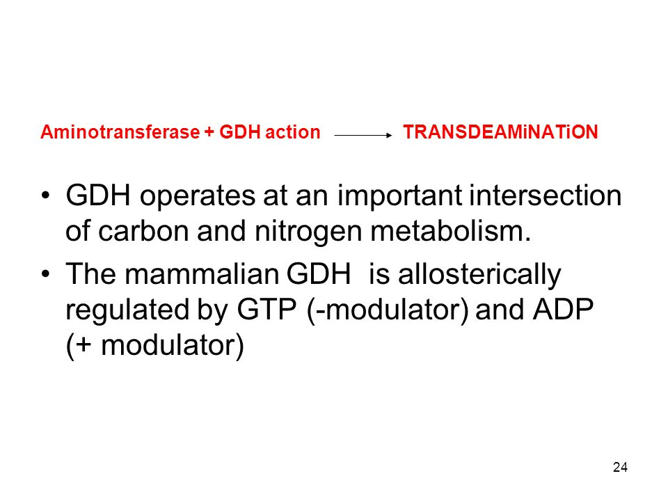 Aminotransferase + GDH action TRANSDEAMiNATiON GDH operates at an important intersection of carbon and nitrogen metabolism. The mammalian GDH is allos