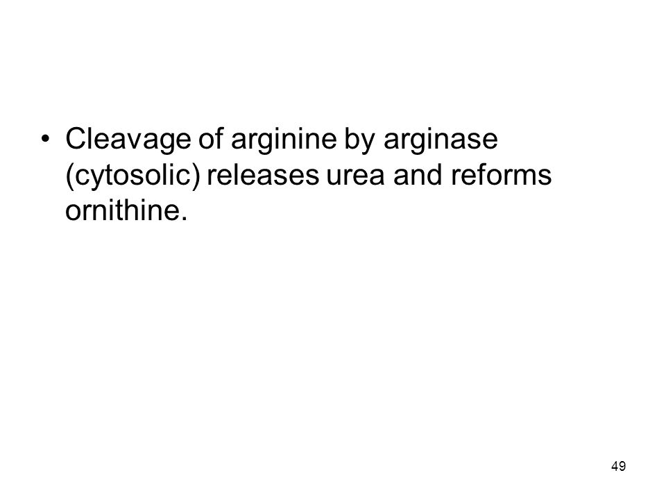 Cleavage of arginine by arginase (cytosolic) releases urea and reforms ornithine. 49