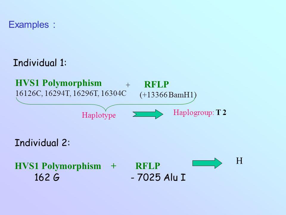 Examples : HVS1 Polymorphism 16126C, 16294T, 16296T, 16304C + RFLP (+13366 BamH1) Haplotype Haplogroup: T 2 Individual 2: HVS1 Polymorphism + RFLP 162 G - 7025 Alu I H Individual 1: