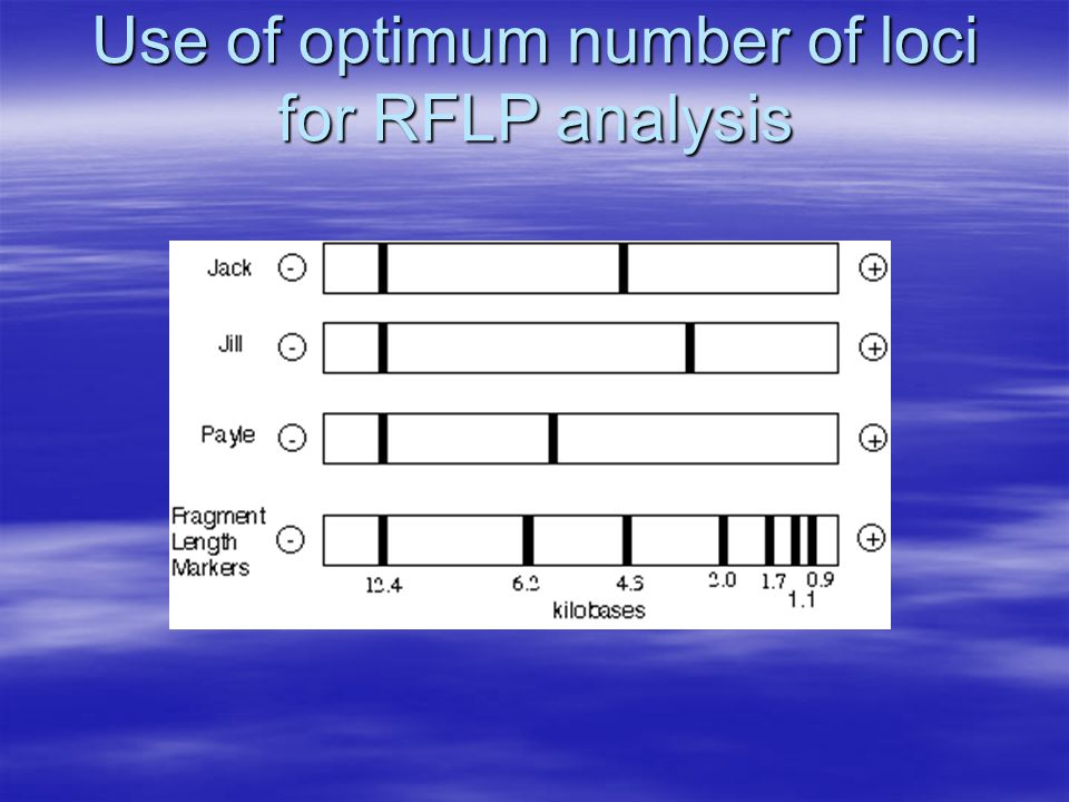 Use of optimum number of loci for RFLP analysis