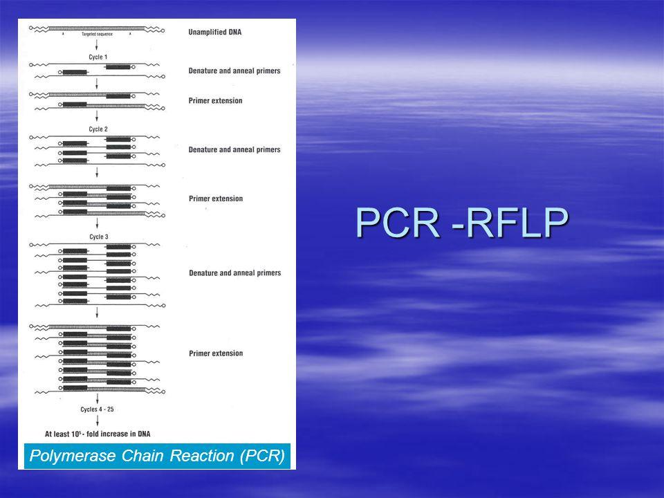 Polymerase Chain Reaction (PCR) PCR -RFLP