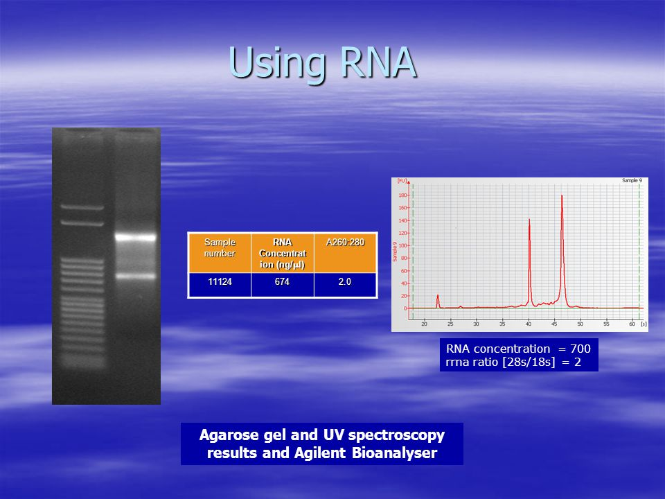 Using RNA Agarose gel and UV spectroscopy results and Agilent Bioanalyser Sample number RNA Concentrat ion (ng/  l) A260:280 111246742.0 RNA concentration = 700 rrna ratio [28s/18s] = 2