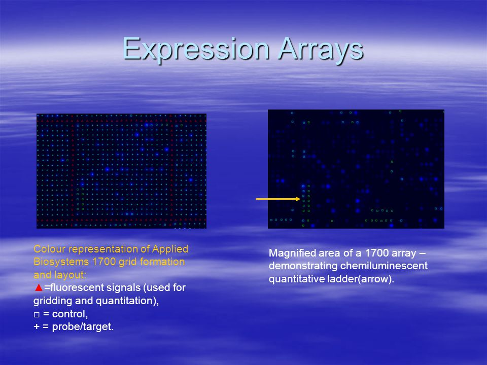 Expression Arrays Colour representation of Applied Biosystems 1700 grid formation and layout: ▲=fluorescent signals (used for gridding and quantitation), □ = control, + = probe/target.