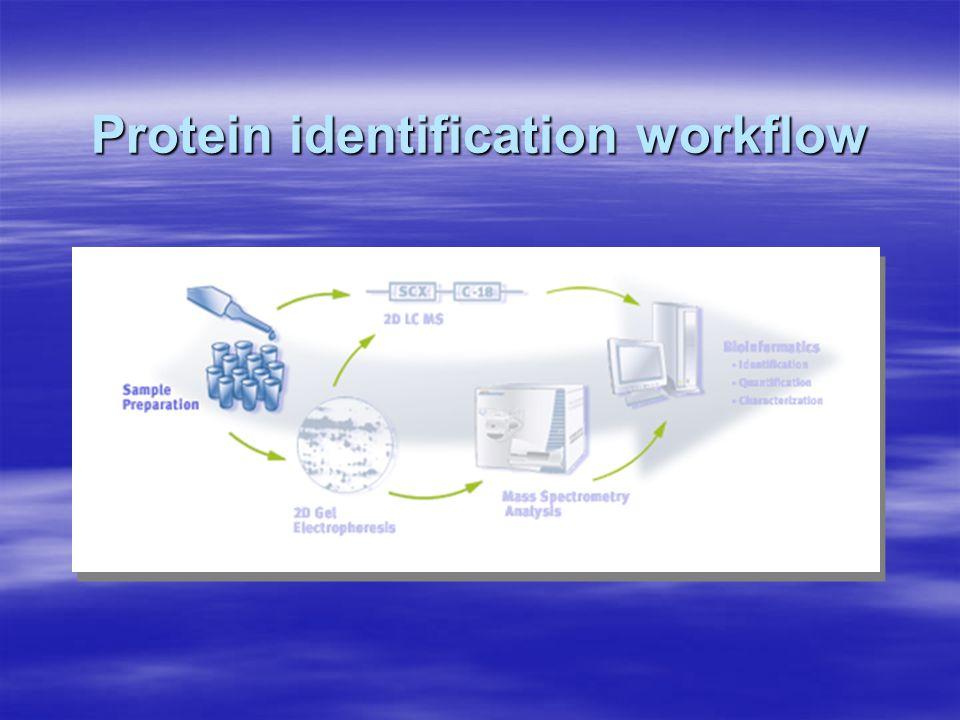 Protein identification workflow
