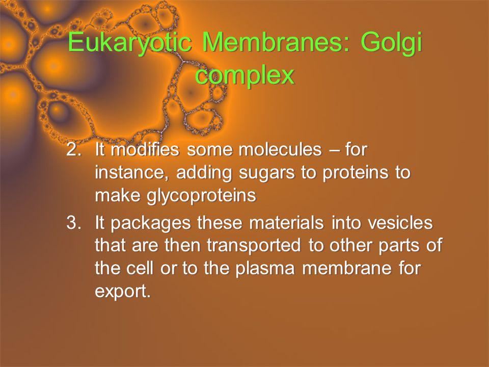 Eukaryotic Membranes: Chloroplasts and Mitochondria