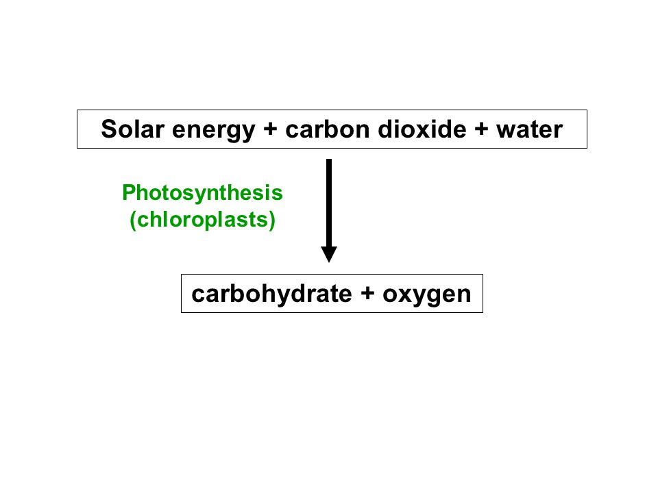 Solar energy + carbon dioxide + water carbohydrate + oxygen Photosynthesis (chloroplasts)