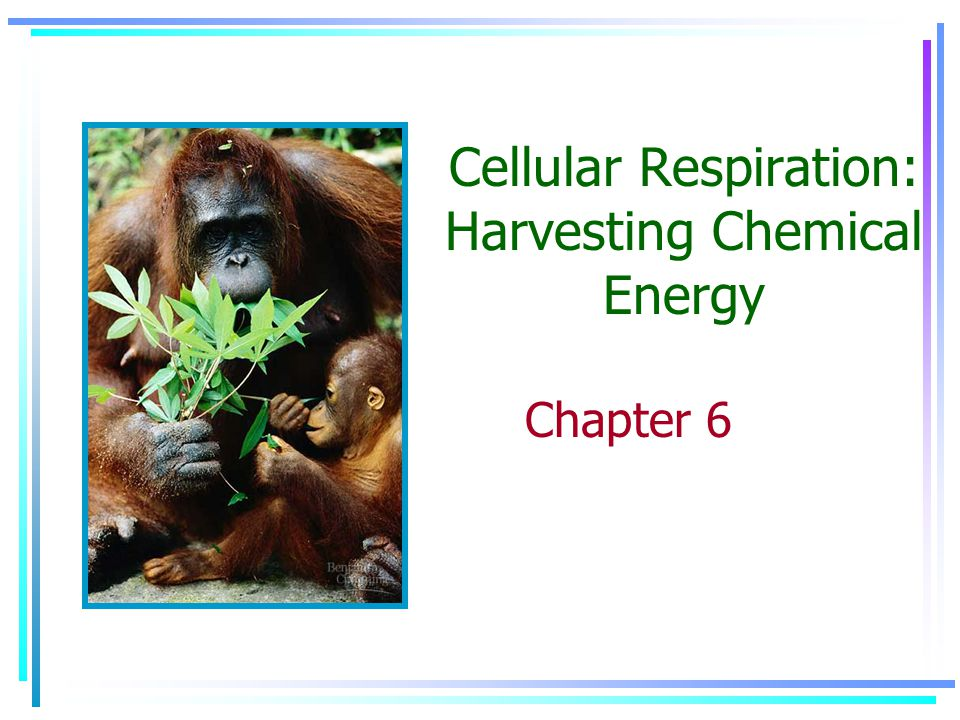Cellular Respiration: Harvesting Chemical Energy Chapter 6