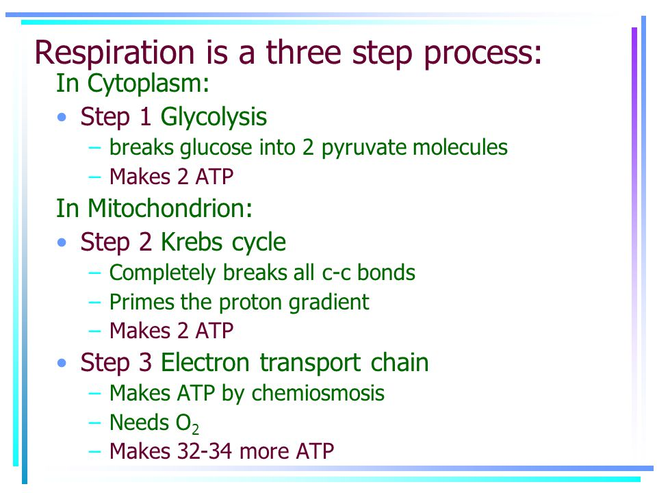 Respiration is a three step process: In Cytoplasm: Step 1 Glycolysis –breaks glucose into 2 pyruvate molecules –Makes 2 ATP In Mitochondrion: Step 2 Krebs cycle –Completely breaks all c-c bonds –Primes the proton gradient –Makes 2 ATP Step 3 Electron transport chain –Makes ATP by chemiosmosis –Needs O 2 –Makes 32-34 more ATP