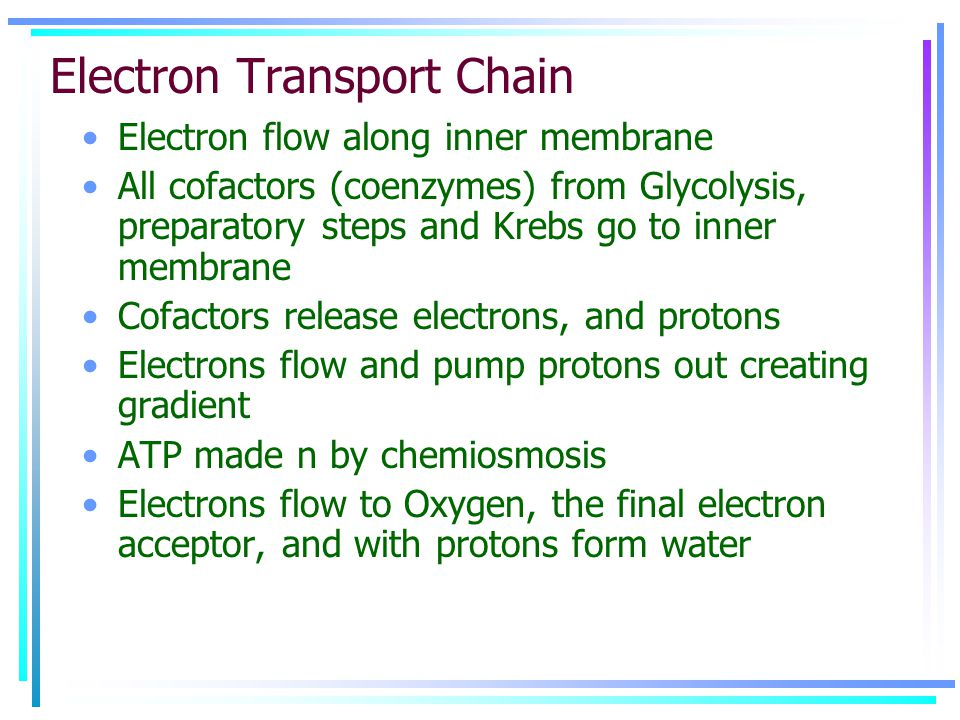 Electron Transport Chain Electron flow along inner membrane All cofactors (coenzymes) from Glycolysis, preparatory steps and Krebs go to inner membrane Cofactors release electrons, and protons Electrons flow and pump protons out creating gradient ATP made n by chemiosmosis Electrons flow to Oxygen, the final electron acceptor, and with protons form water