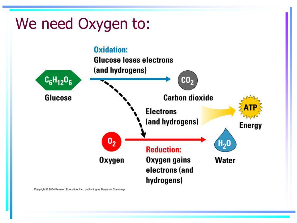 We need Oxygen to: