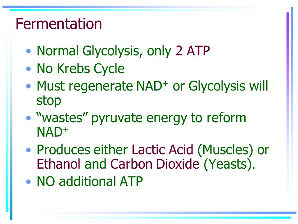 """Fermentation Normal Glycolysis, only 2 ATP No Krebs Cycle Must regenerate NAD + or Glycolysis will stop """"wastes"""" pyruvate energy to reform NAD + Produ"""