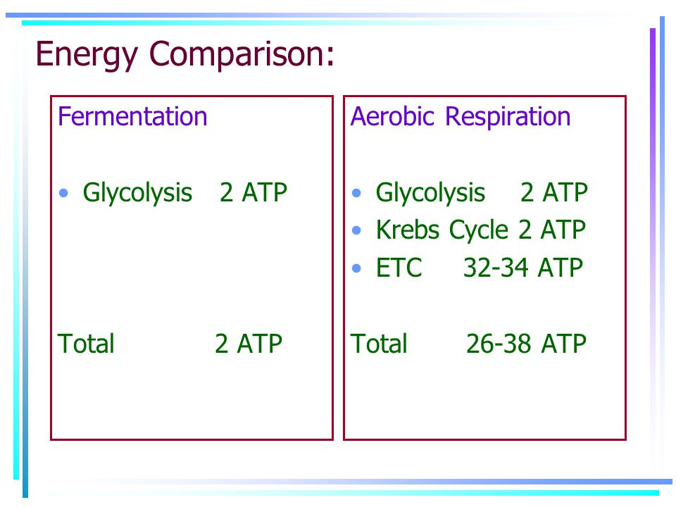 Energy Comparison: Fermentation Glycolysis 2 ATP Total 2 ATP Aerobic Respiration Glycolysis 2 ATP Krebs Cycle 2 ATP ETC 32-34 ATP Total 26-38 ATP