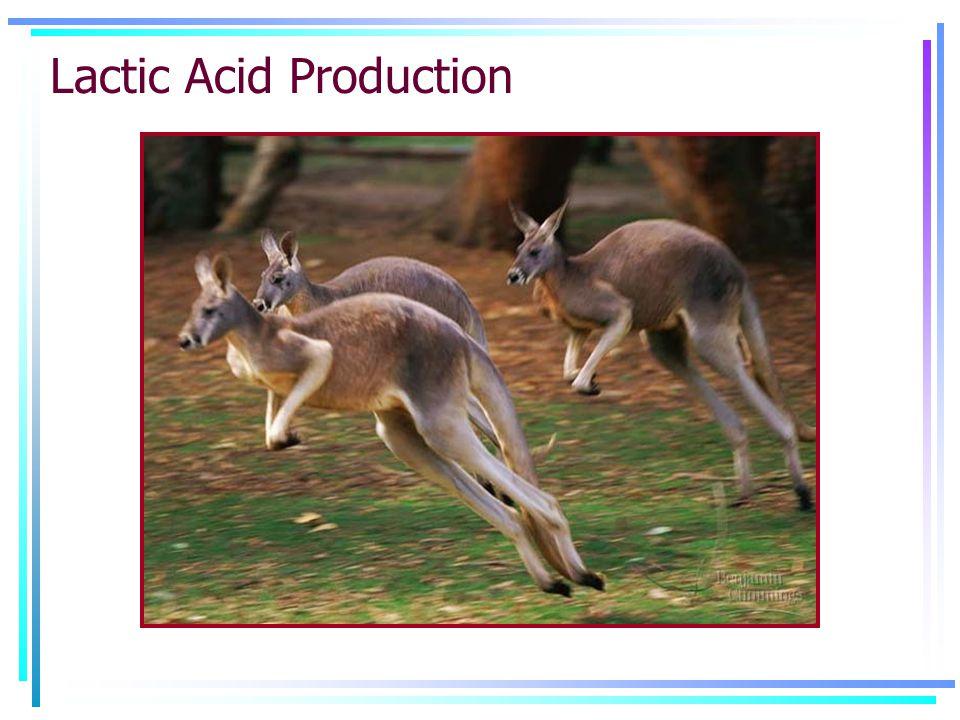 Lactic Acid Production