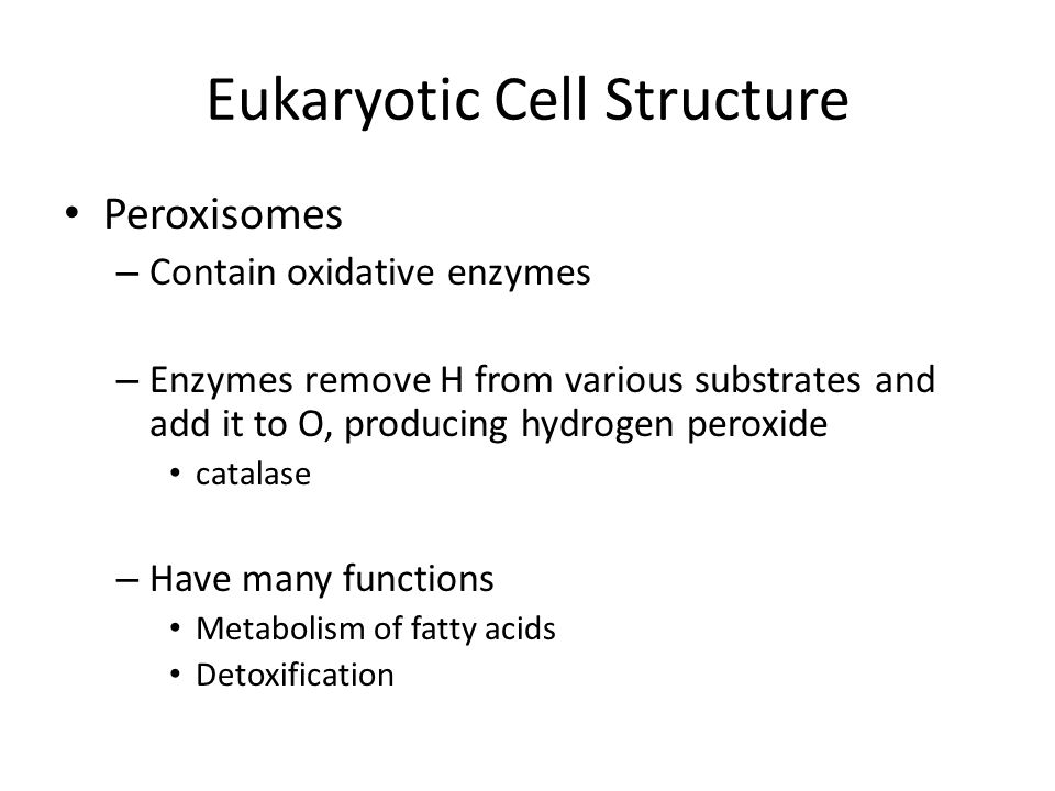 Eukaryotic Cell Structure Peroxisomes – Contain oxidative enzymes – Enzymes remove H from various substrates and add it to O, producing hydrogen peroxide catalase – Have many functions Metabolism of fatty acids Detoxification