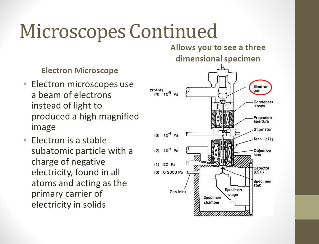 Microscopes Continued Electron Microscope Electron microscopes use a beam of electrons instead of light to produced a high magnified image Electron is