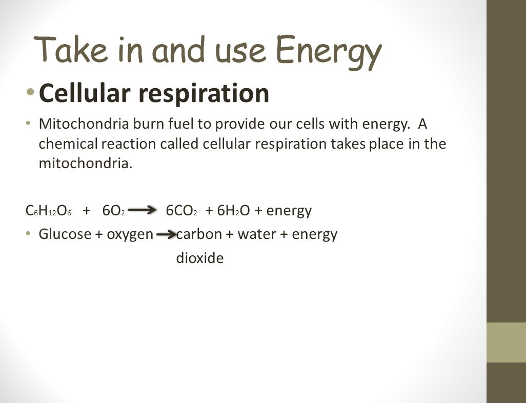 Take in and use Energy Cellular respiration Mitochondria burn fuel to provide our cells with energy. A chemical reaction called cellular respiration t