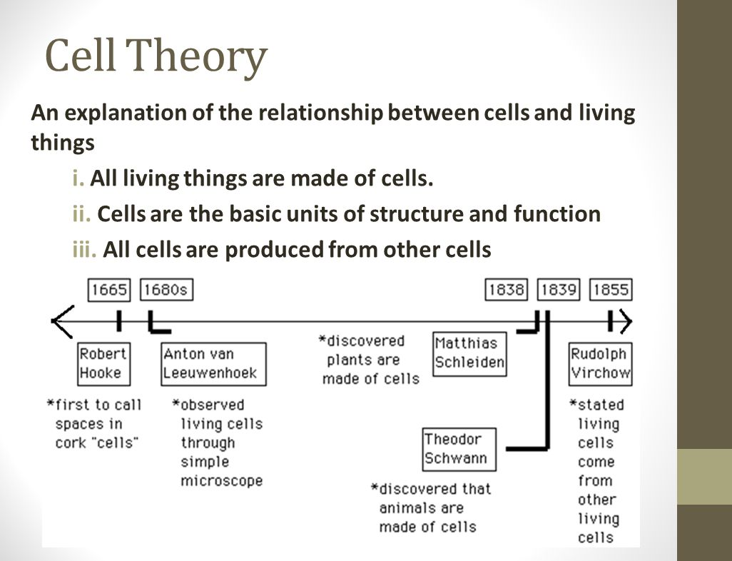 Cell Theory An explanation of the relationship between cells and living things i.All living things are made of cells. ii. Cells are the basic units of