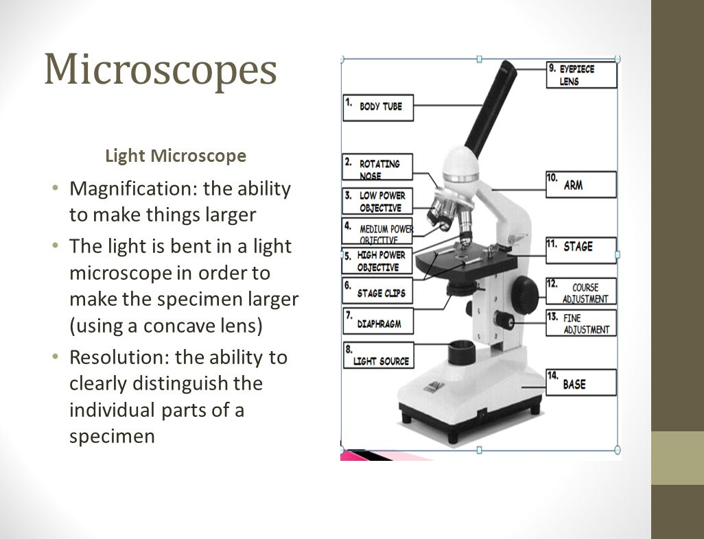 Microscopes Light Microscope Magnification: the ability to make things larger The light is bent in a light microscope in order to make the specimen la