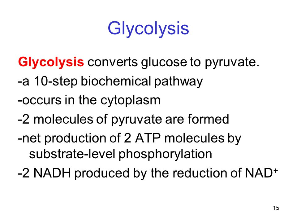 15 Glycolysis Glycolysis converts glucose to pyruvate. -a 10-step biochemical pathway -occurs in the cytoplasm -2 molecules of pyruvate are formed -ne