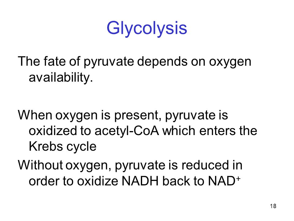18 Glycolysis The fate of pyruvate depends on oxygen availability. When oxygen is present, pyruvate is oxidized to acetyl-CoA which enters the Krebs c