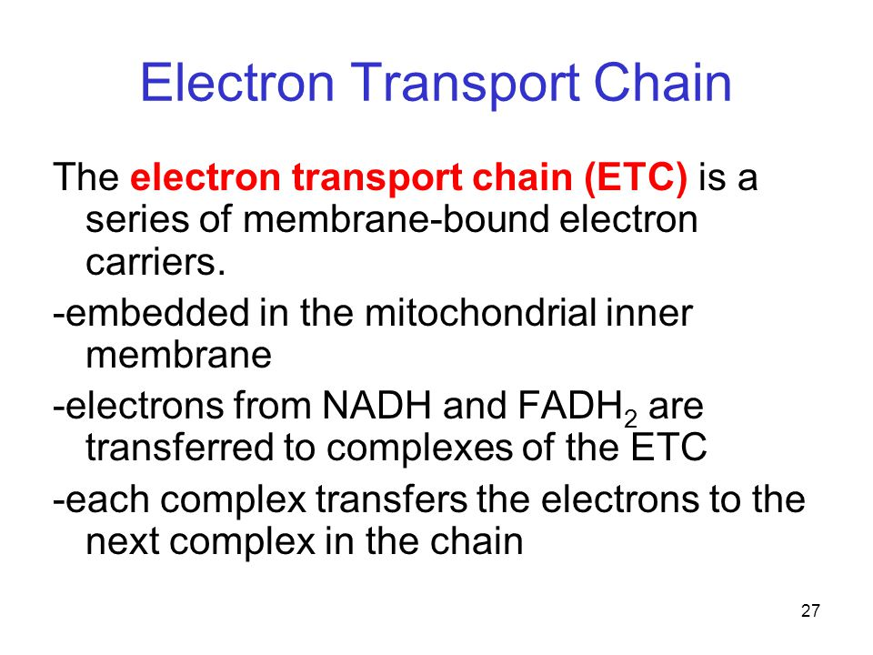 27 Electron Transport Chain The electron transport chain (ETC) is a series of membrane-bound electron carriers.