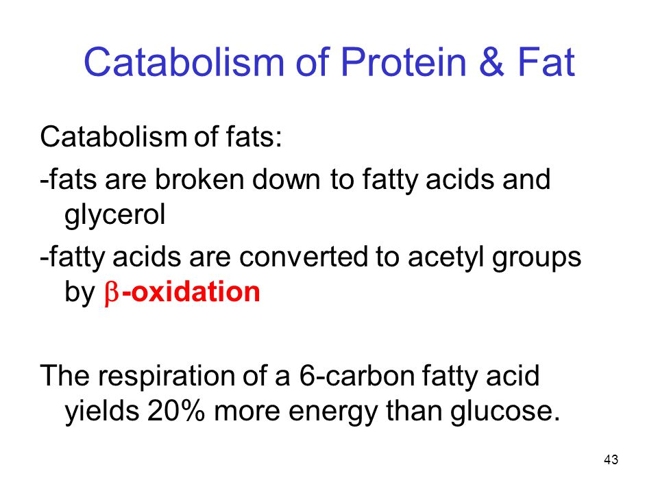 43 Catabolism of Protein & Fat Catabolism of fats: -fats are broken down to fatty acids and glycerol -fatty acids are converted to acetyl groups by  -oxidation The respiration of a 6-carbon fatty acid yields 20% more energy than glucose.