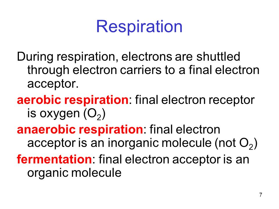 7 Respiration During respiration, electrons are shuttled through electron carriers to a final electron acceptor. aerobic respiration: final electron r