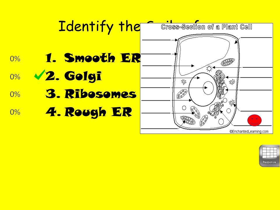 Identify the Smiley face 1.Smooth ER 2.Golgi 3.Ribosomes 4.Rough ER