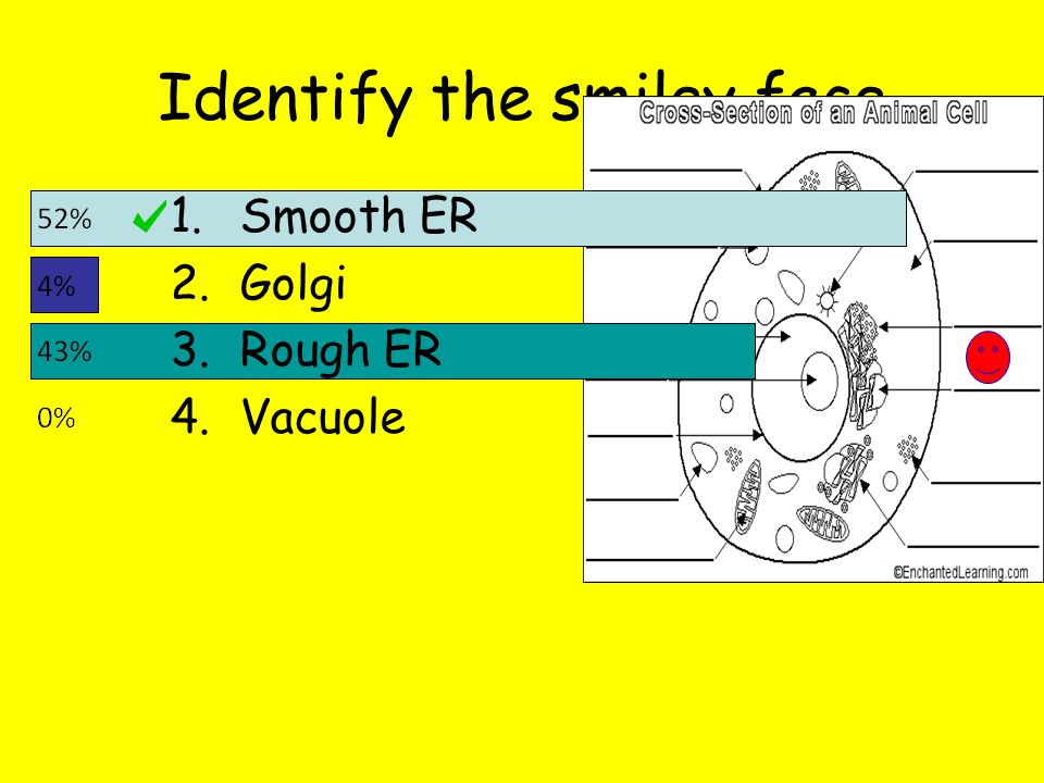 Identify the smiley face 1.Smooth ER 2.Golgi 3.Rough ER 4.Vacuole