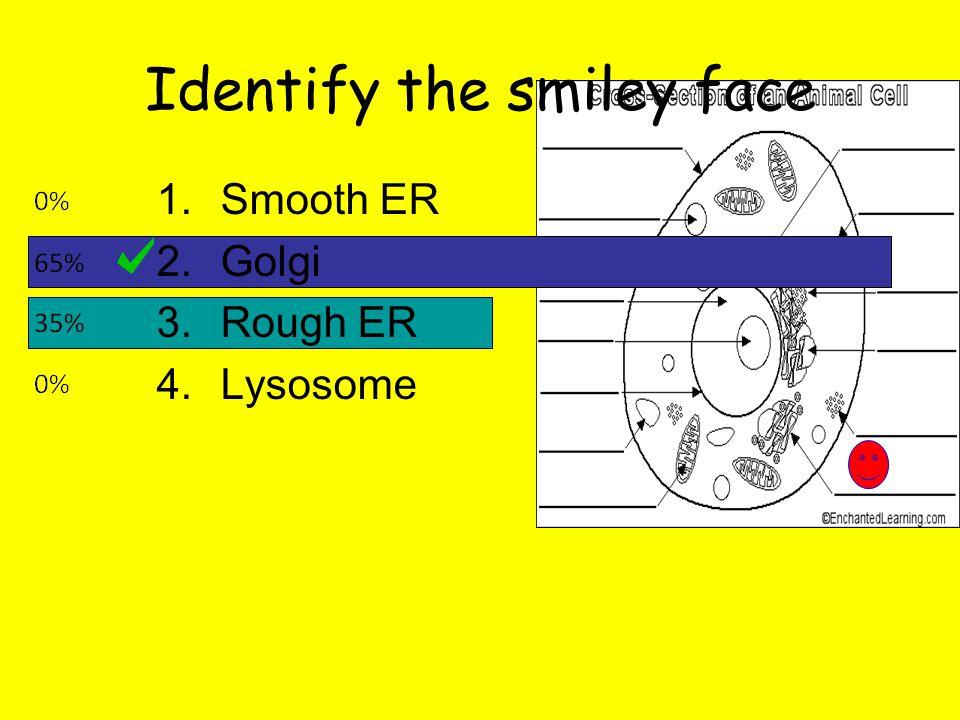 Identify the smiley face 1.Smooth ER 2.Golgi 3.Rough ER 4.Lysosome