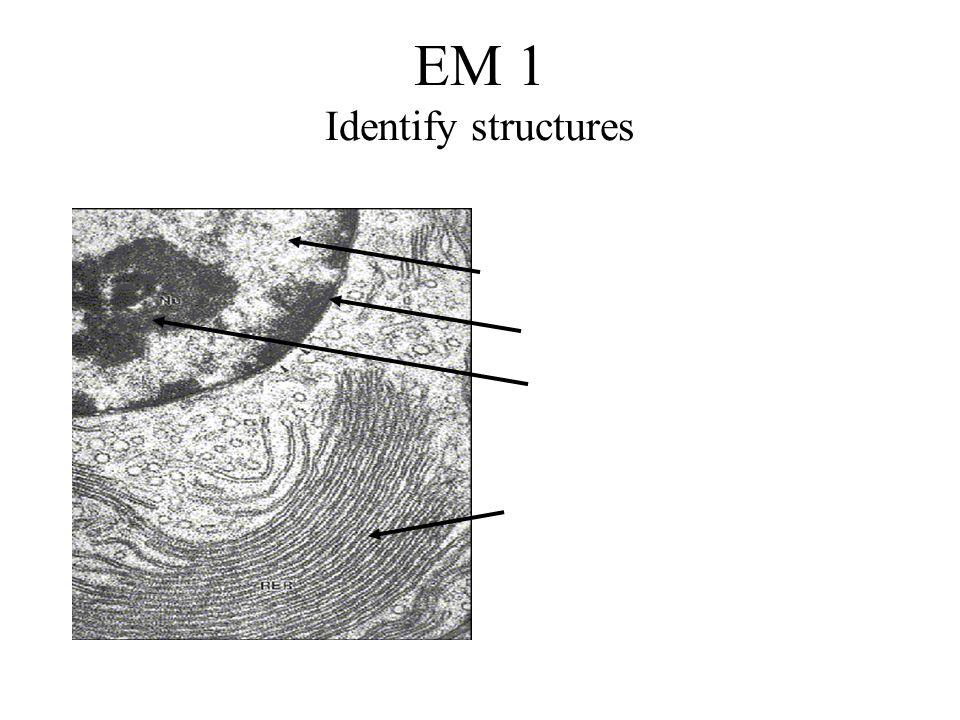 EM 1 Identify structures