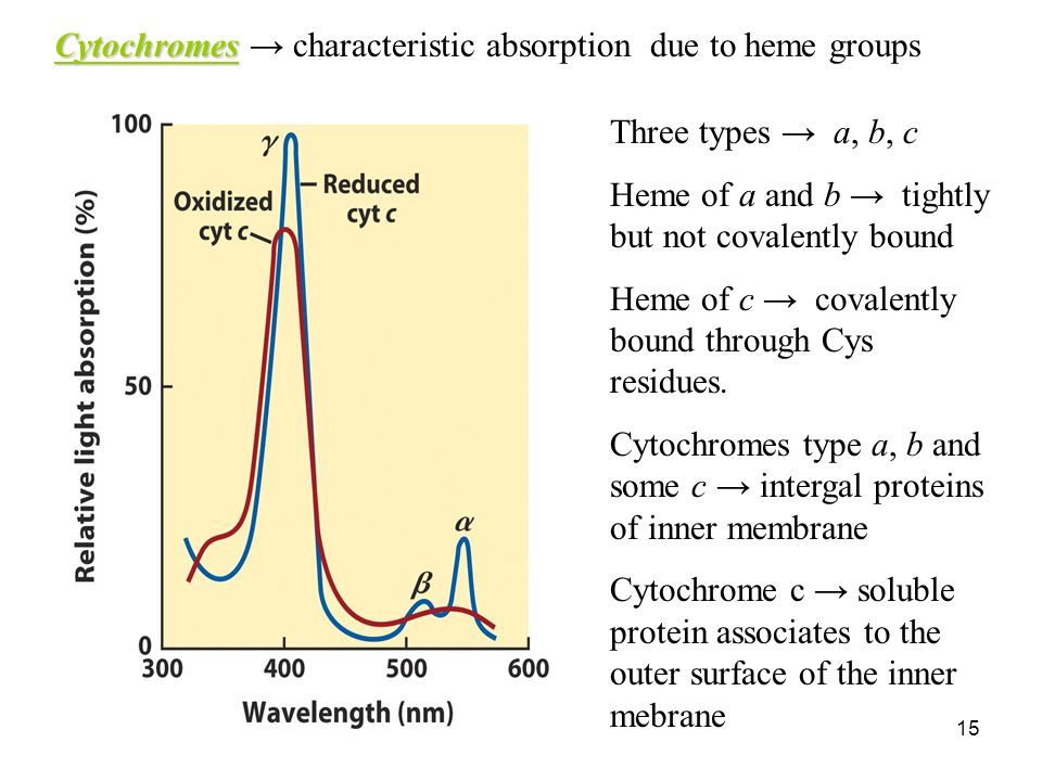 15 Cytochromes Cytochromes → characteristic absorption due to heme groups Three types → a, b, c Heme of a and b → tightly but not covalently bound Heme of c → covalently bound through Cys residues.