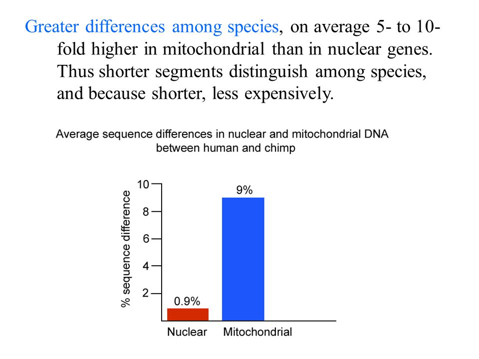 Greater differences among species, on average 5- to 10- fold higher in mitochondrial than in nuclear genes. Thus shorter segments distinguish among sp
