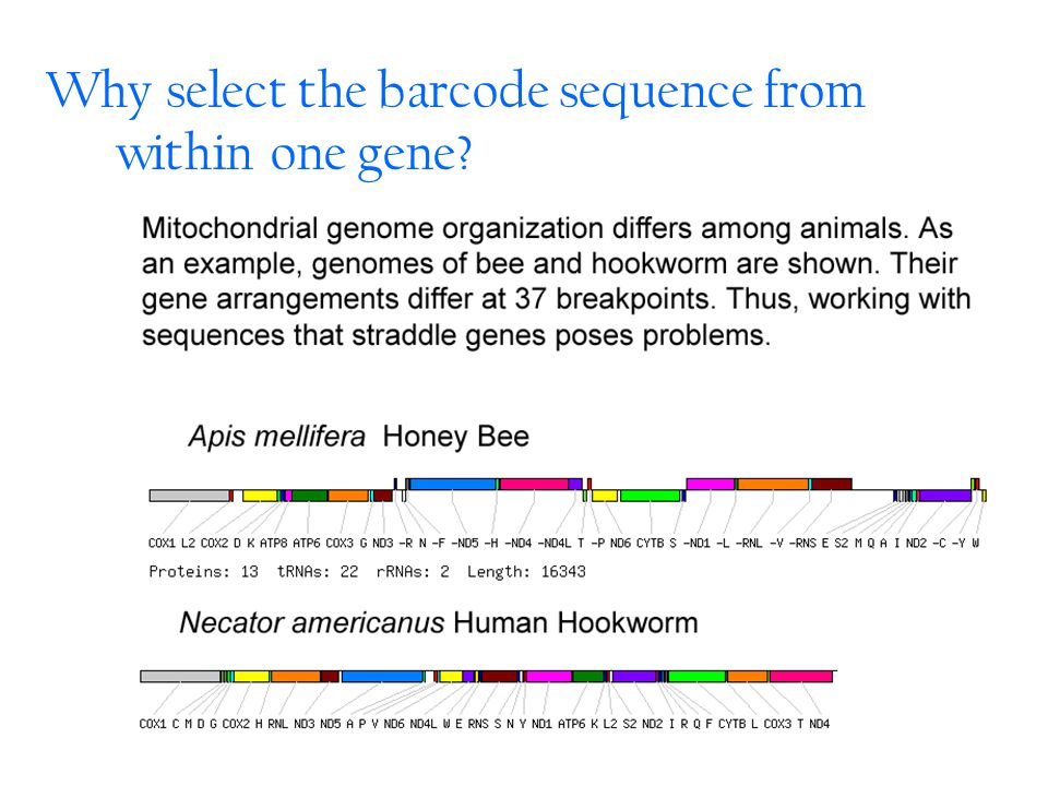 Why select the barcode sequence from within one gene?