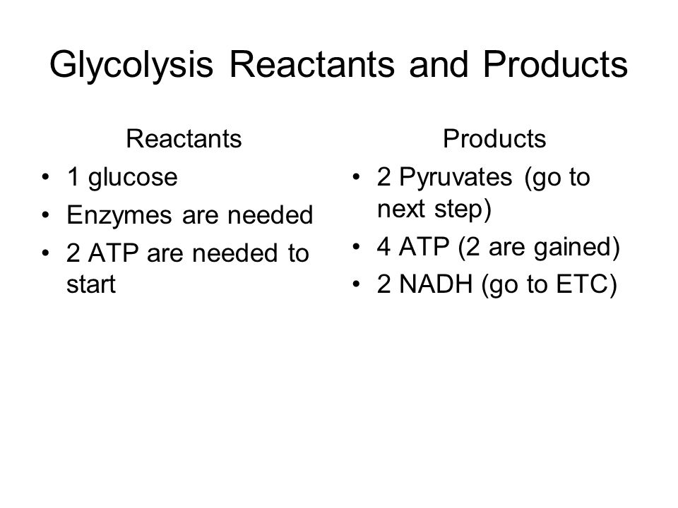 Glycolysis Reactants and Products Reactants 1 glucose Enzymes are needed 2 ATP are needed to start Products 2 Pyruvates (go to next step) 4 ATP (2 are gained) 2 NADH (go to ETC)