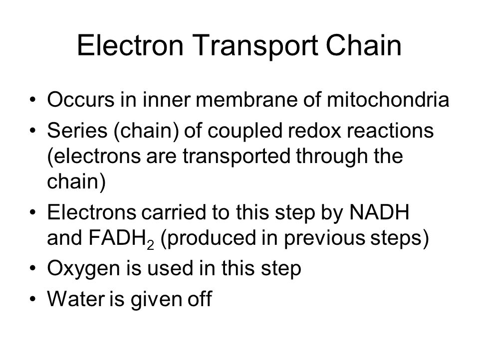 Electron Transport Chain Occurs in inner membrane of mitochondria Series (chain) of coupled redox reactions (electrons are transported through the chain) Electrons carried to this step by NADH and FADH 2 (produced in previous steps) Oxygen is used in this step Water is given off