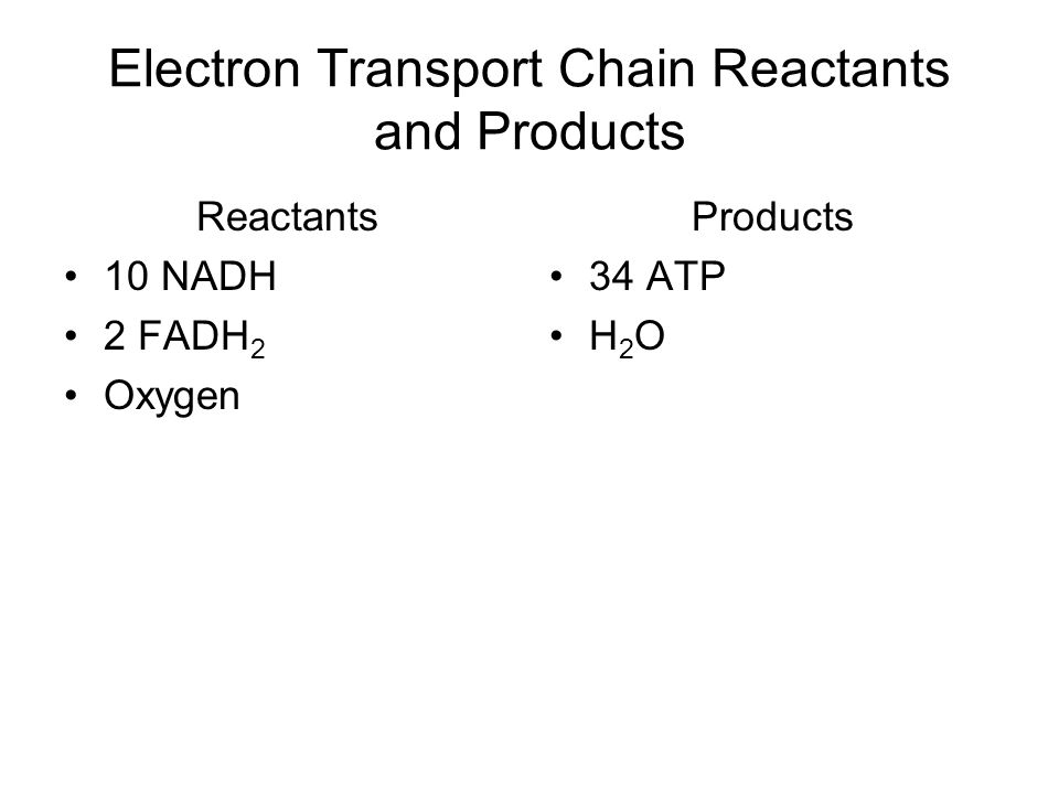 Electron Transport Chain Reactants and Products Reactants 10 NADH 2 FADH 2 Oxygen Products 34 ATP H 2 O