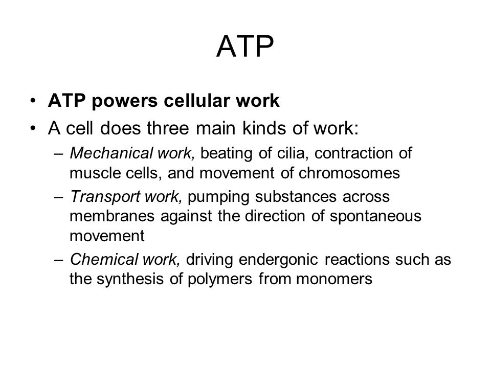 ATP ATP powers cellular work A cell does three main kinds of work: –Mechanical work, beating of cilia, contraction of muscle cells, and movement of chromosomes –Transport work, pumping substances across membranes against the direction of spontaneous movement –Chemical work, driving endergonic reactions such as the synthesis of polymers from monomers