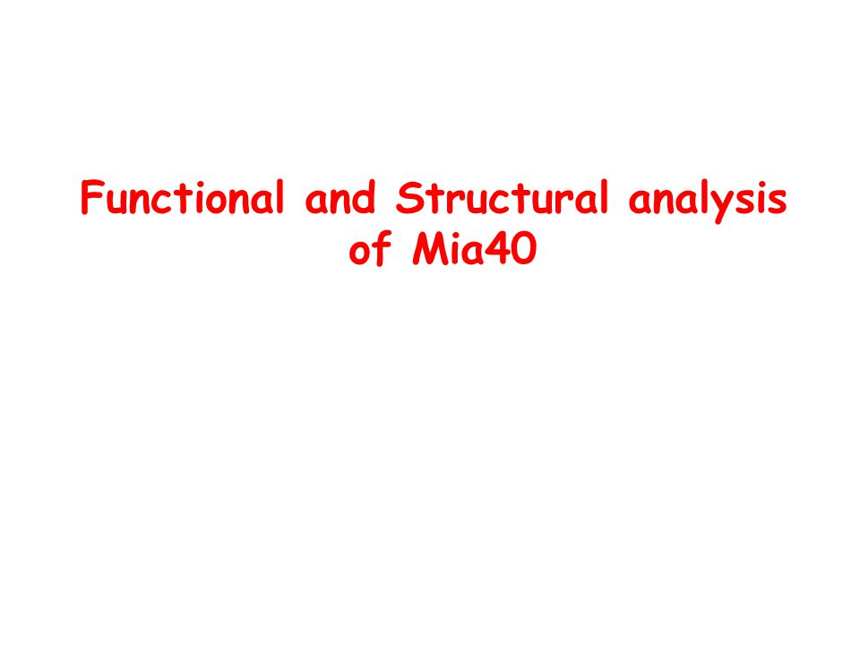 Functional and Structural analysis of Mia40