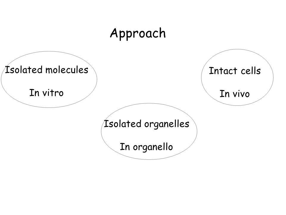 Approach Isolated molecules In vitro Intact cells In vivo Isolated organelles In organello