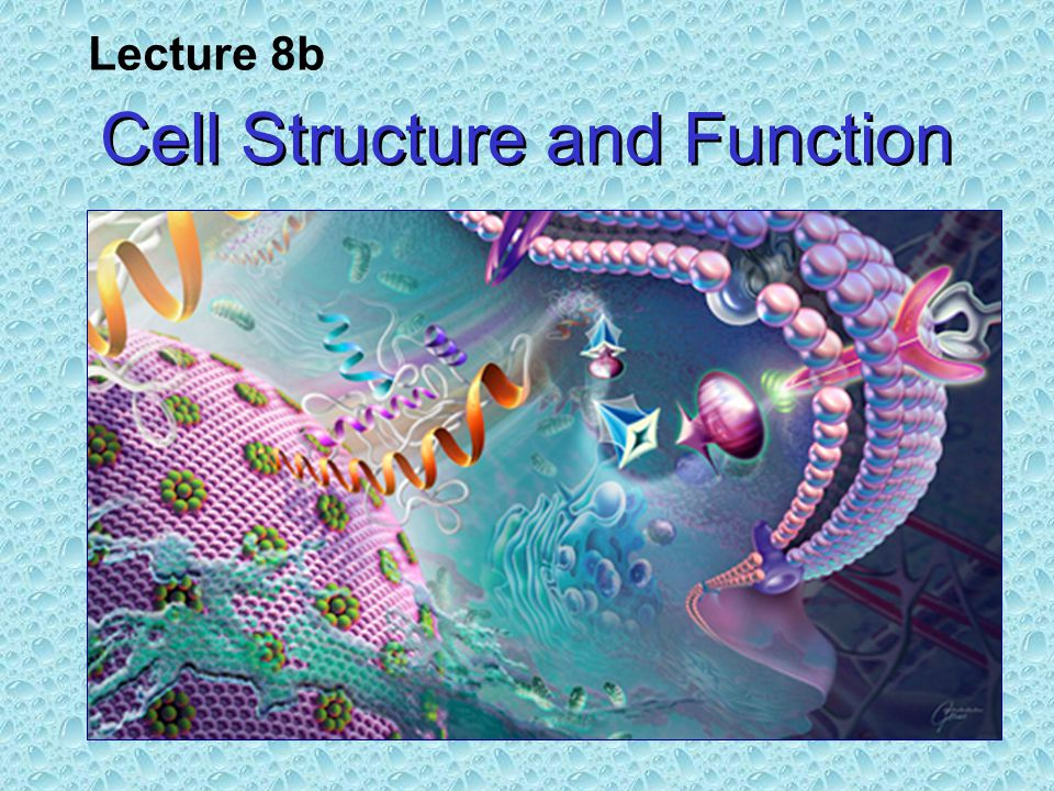 Cell Structure and Function Lecture 8b