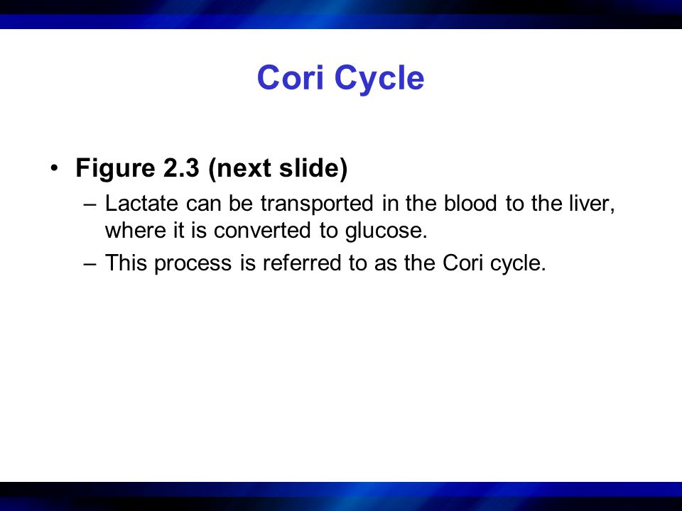 Cori Cycle Figure 2.3 (next slide) –Lactate can be transported in the blood to the liver, where it is converted to glucose. –This process is referred