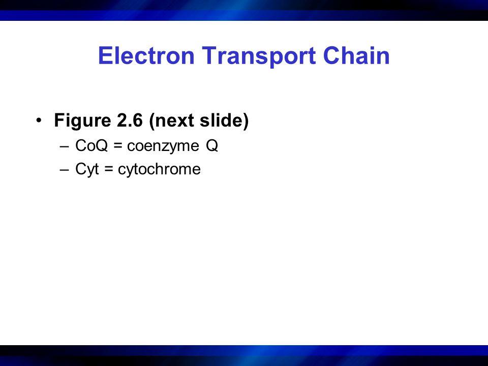 Electron Transport Chain Figure 2.6 (next slide) –CoQ = coenzyme Q –Cyt = cytochrome
