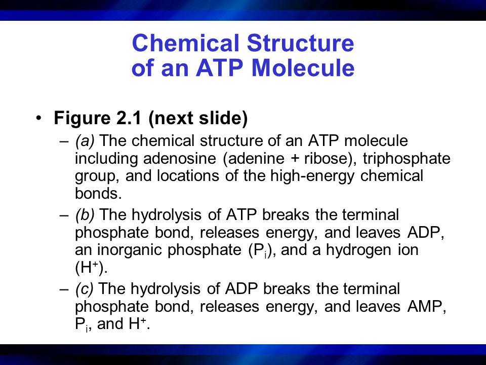 Chemical Structure of an ATP Molecule Figure 2.1 (next slide) –(a) The chemical structure of an ATP molecule including adenosine (adenine + ribose), t