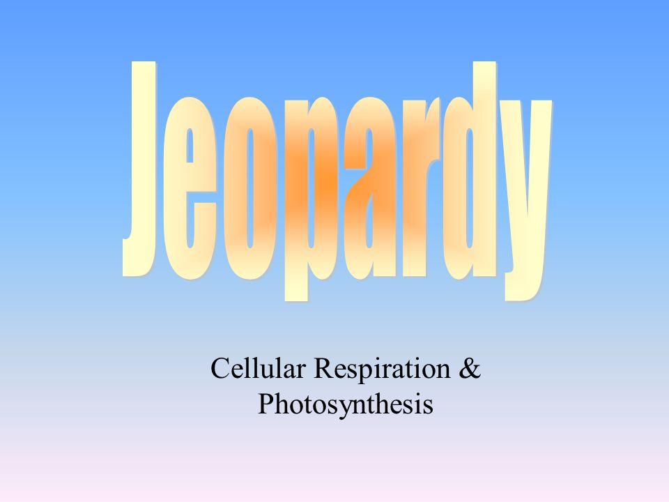 Science 7: 1/18/12 Elodea Lab / Jeopardy C.