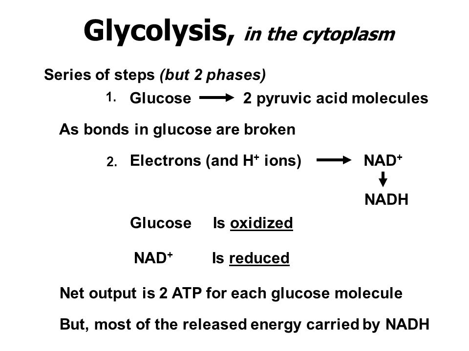 Glycolysis, in the cytoplasm Series of steps (but 2 phases) Glucose2 pyruvic acid molecules As bonds in glucose are broken Electrons (and H + ions)NAD