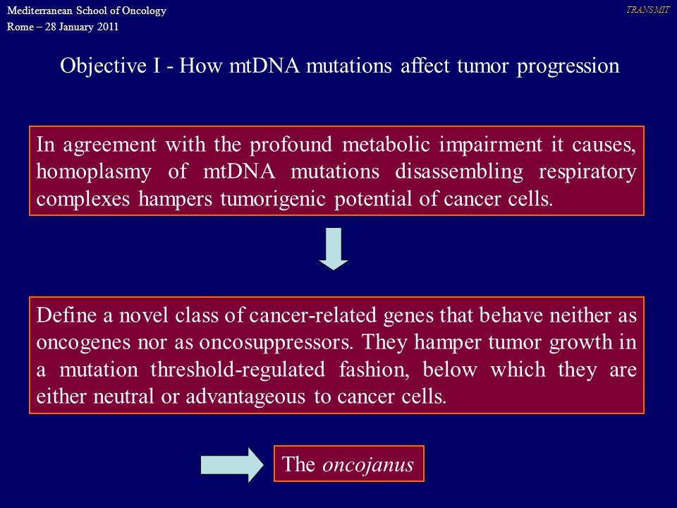Objective I - How mtDNA mutations affect tumor progression TRANSMIT In agreement with the profound metabolic impairment it causes, homoplasmy of mtDNA mutations disassembling respiratory complexes hampers tumorigenic potential of cancer cells.