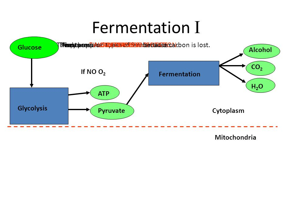 And they produce CARBON DIOXIDE Fermentation I Glycolysis If NO O 2 Fermentation Glucose Pyruvate Cytoplasm Mitochondria ATP CO 2 Alcohol They produce ALCOHOL H2OH2O They produce WATER There are TWO types of fermentation.Yeasts use ALCOHOLIC FERMENTATION.This process is IRREVERSIBLE because carbon is lost.