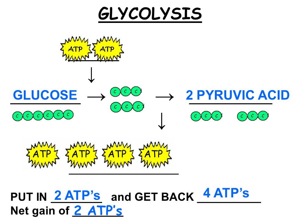 ________ ↓ ___________ → → _____________ ↓ ____________________ GLUCOSE2 PYRUVIC ACID PUT IN ________ and GET BACK __________ Net gain of ________ 2 ATP's 4 ATP's GLYCOLYSIS 2 ATP's ATP ATP